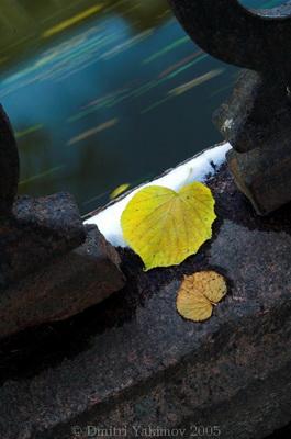 Осеннее соло, фотографии Петербурга, виды города, фотосайт