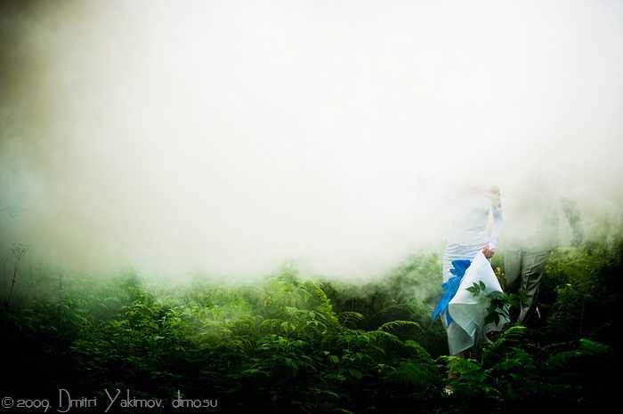 таинственный лес, туман