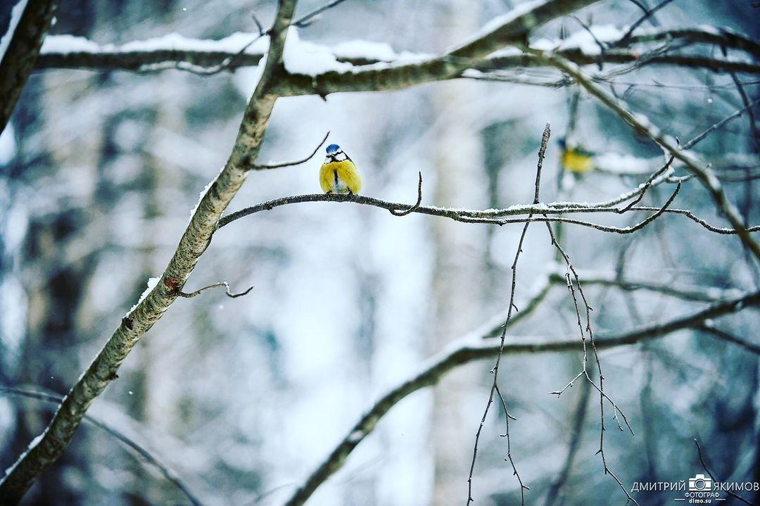 145347483 432382674709788 4136131272253922222 n - Наконец-то на Северо-Запад пришла нормальная зима! Очаровательный и прекрасный Ш...