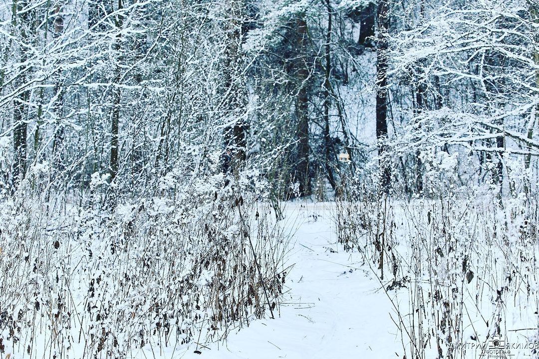 145505222 192087072607399 6280158950982472180 n - Наконец-то на Северо-Запад пришла нормальная зима! Очаровательный и прекрасный Ш...