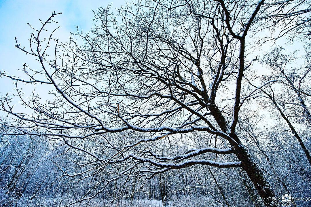 145545946 215194106965594 6062083133175379634 n - Наконец-то на Северо-Запад пришла нормальная зима! Очаровательный и прекрасный Ш...