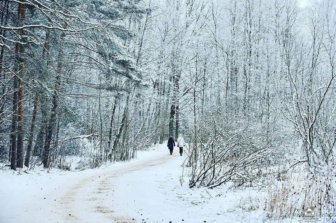 146189762 276511183817917 715339954302134030 n - Наконец-то на Северо-Запад пришла нормальная зима! Очаровательный и прекрасный Ш...