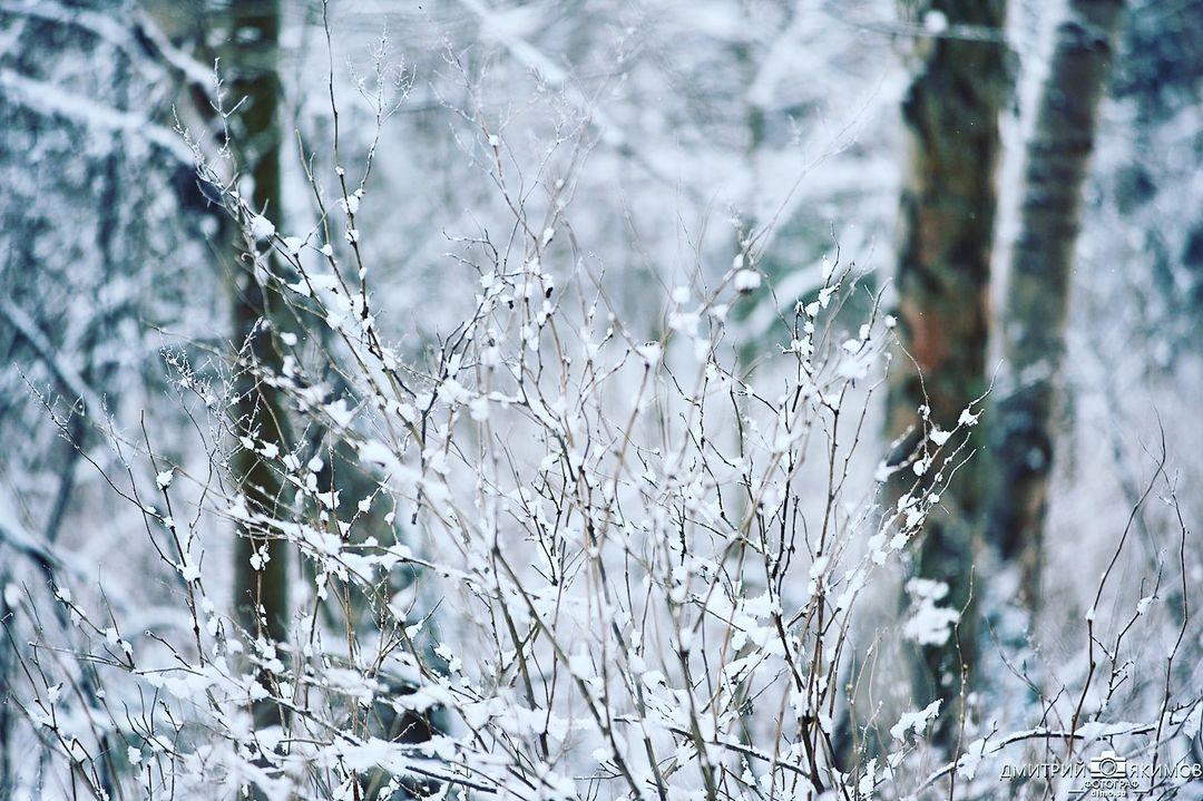 146322044 1128637470987680 8481195827020523347 n - Наконец-то на Северо-Запад пришла нормальная зима! Очаровательный и прекрасный Ш...