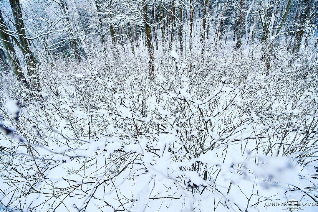 146338995 107418754592512 5512164035496766928 n - Наконец-то на Северо-Запад пришла нормальная зима! Очаровательный и прекрасный Ш...